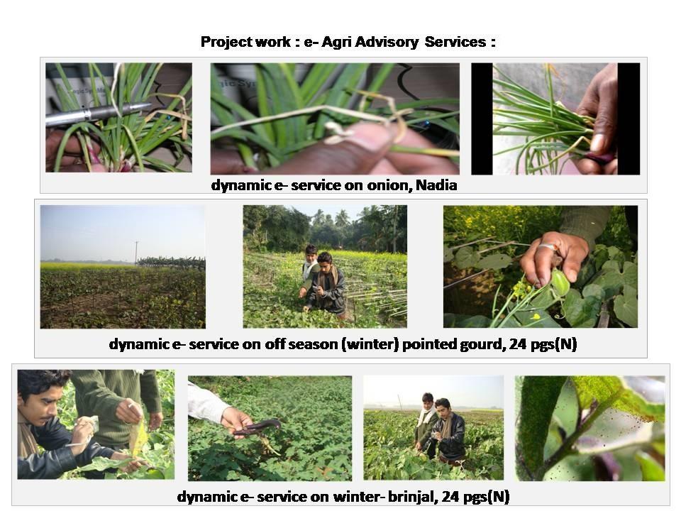 crop-advisory-07