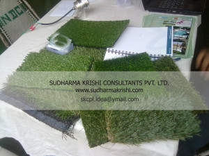 Displaying Synthetic turf
