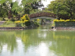 Park - bridge and vegetation combination