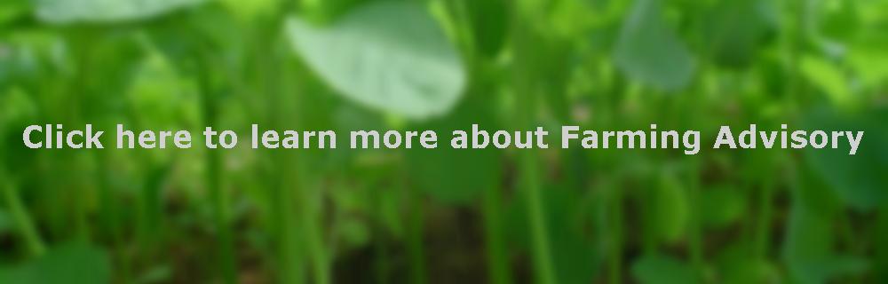 farming-advisory