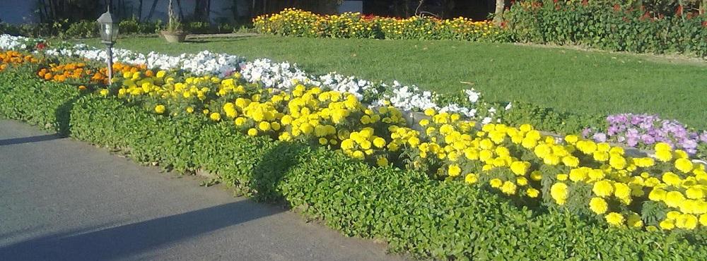 gardening-apilur